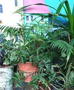 Комнатные растения растения в